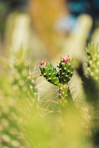 Arizona Garden6.jpg