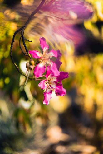 Arizona Garden5.jpg