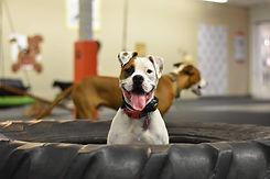 one dog member.jpg