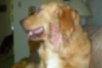 dogskin1-300x200.jpg