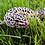Thumbnail: Female Leopard Gecko