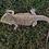 Thumbnail: Adult Male Bearded Dragon