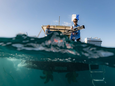 Blue Belt Programme announcement of the Global Ocean Wildlife Analysis Network