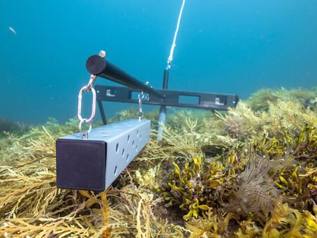 SCUBA Diving Magazine - BRUVS observing over 1 million square miles of ocean