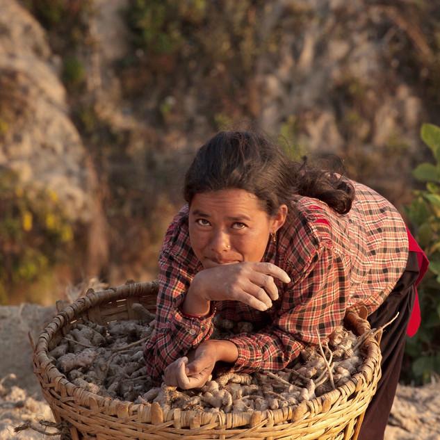 Sustainable Ginger Farmer - Kumari, Nepal