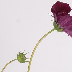 Katie's Flowers