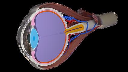 eyeball no pupil.png