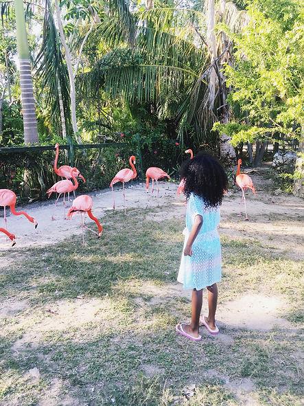 Little girl feeding pink flamingos in the Bahamas