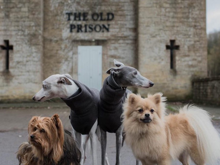 Dogs at The Old Prison