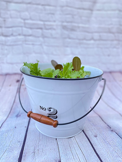 The Salad Club