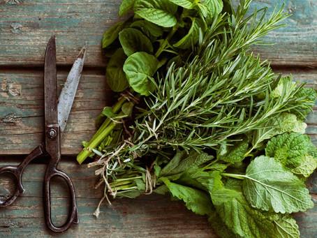 Harvesting Herbs 101