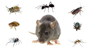pest image.jpg