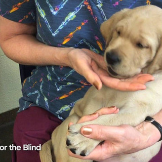 Guide Dogs Nail Trimming