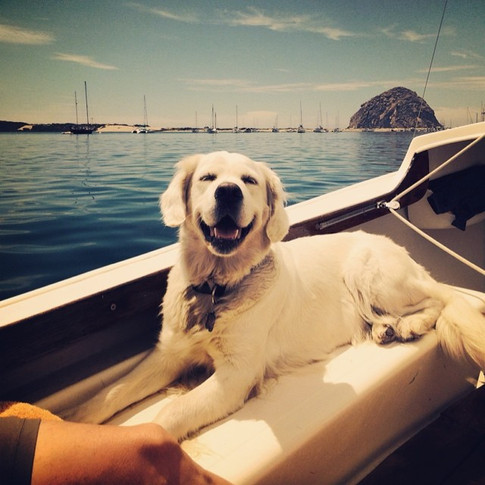 Libby is the happiest girl EVER! Beautiful day in Morro Bay! #nicholberrygoldens #englishgoldens #petscorner #petstagram #ilovegoldens