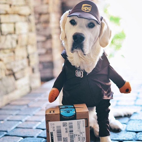 Never has a UPS uniform been worn by a cuter one than this!! _tiff0801 thanks for the laugh 🐾😂🐾