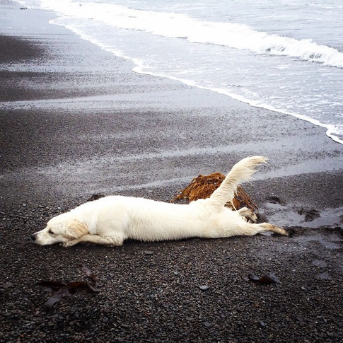 Silly girl!!! Quinn likes to lay like an orca & use her tail as a rudder.jpg