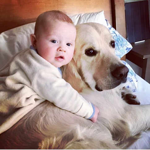 A lot of the families who get puppies from us are young couples, looking to have a 4 legged _child_ before their first two legged child.jpg