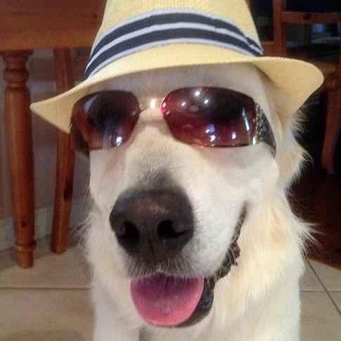 Tessa boy _)_#englishgoldenretrieverpuppy #nicholberrygoldens  #puppypalace #englishgoldenretriever