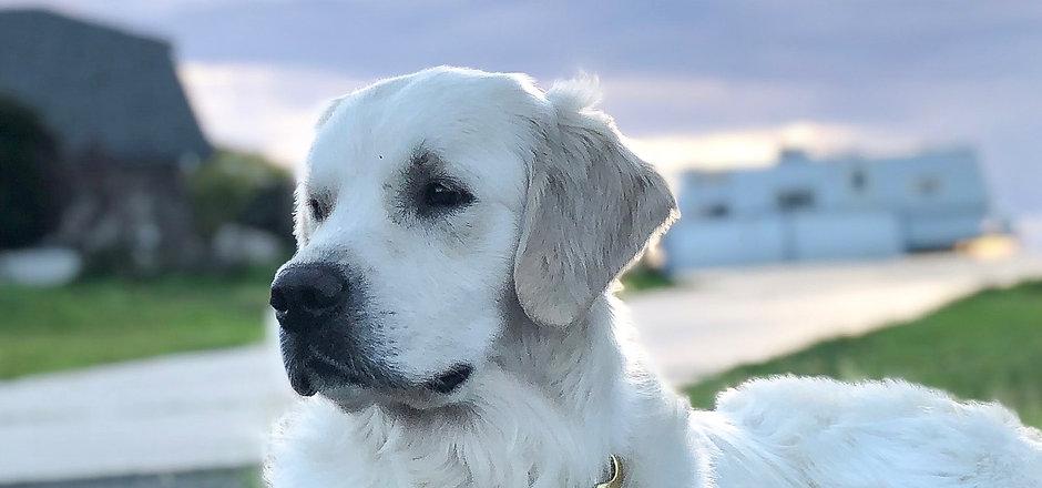 Rufus 16 months.jpeg