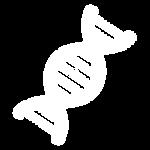 cromossomo-icon.png