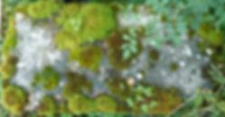 4.pilo1.jpg