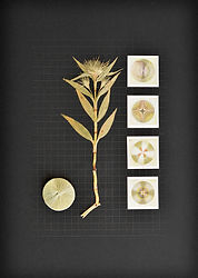 6.Flor6_Herbarium.jpg