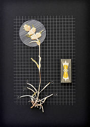 5.Flor5_Herbarium.jpg
