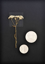 1.Flor1_Herbarium .jpg