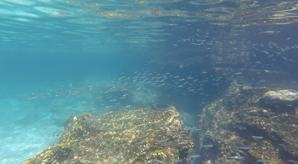 Galapagos Islands Snorkelling