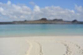 Galapagos Islands Turtle Tracks