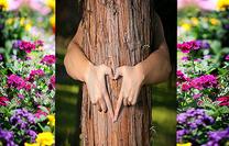 tree_bhind-old.png