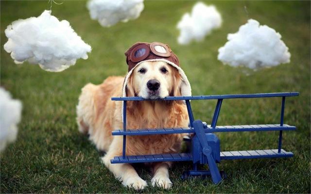 dog-airplane-helmet-12x18-20X30-24X36-32x48-inch-Poster-Print-36.jpg_640x640