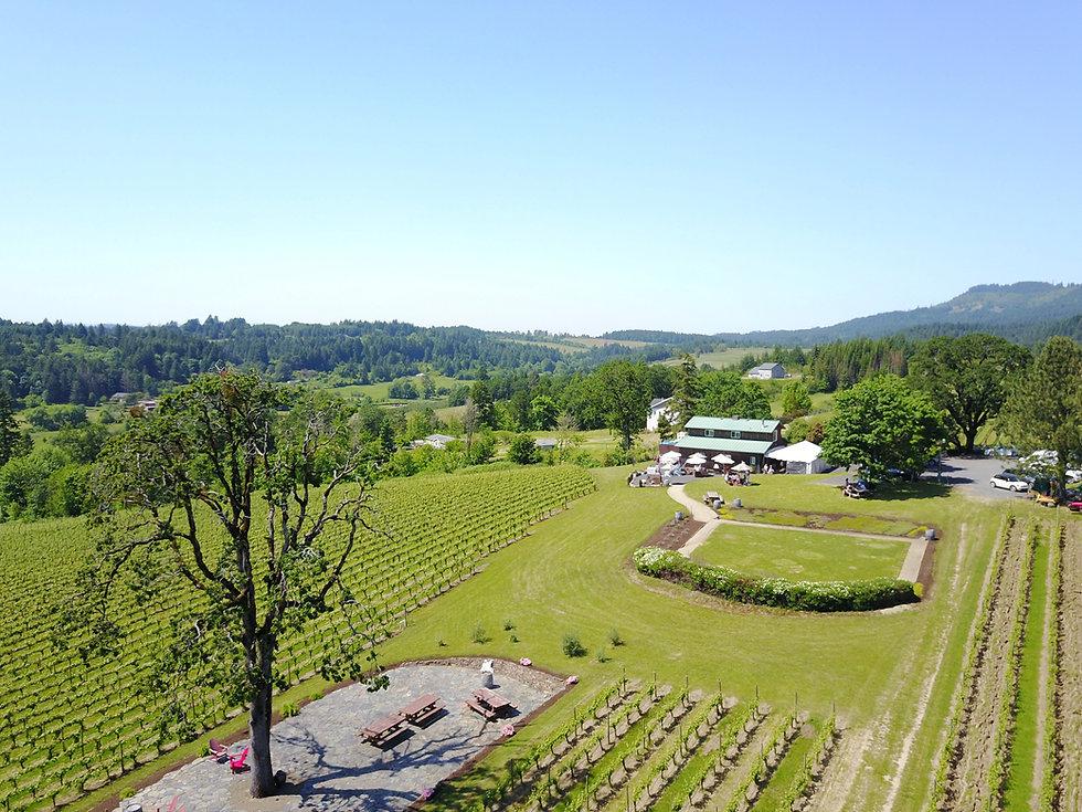 vineyard arial.jpg