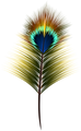 Peacock_Feather_PNG_Clip_Art.png