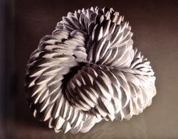 Nudo blanco, 2002