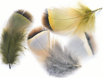 French Partridge Hackle