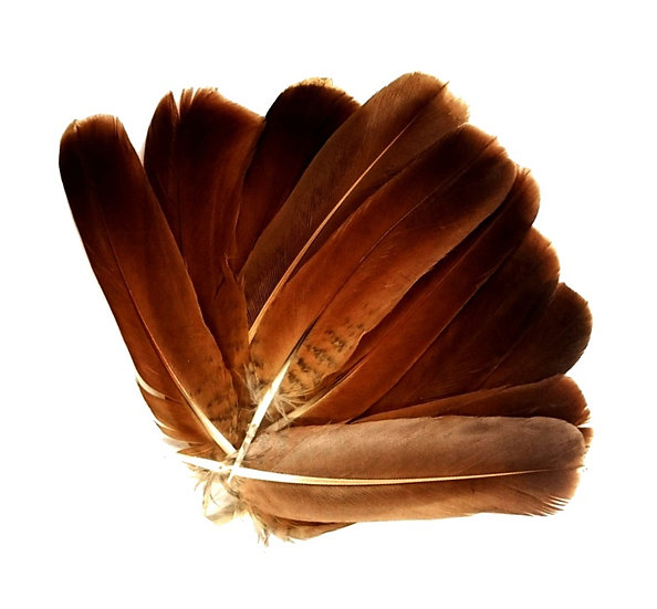 English Partridge Cinnamon Tails