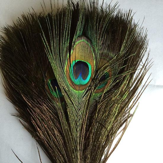 Peacock Eyes Pair