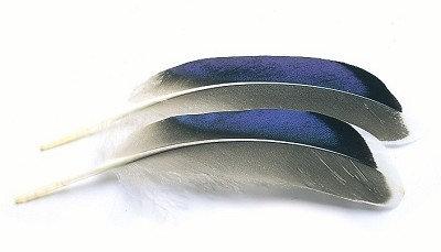 Mallard Quill Blue w/White Tip