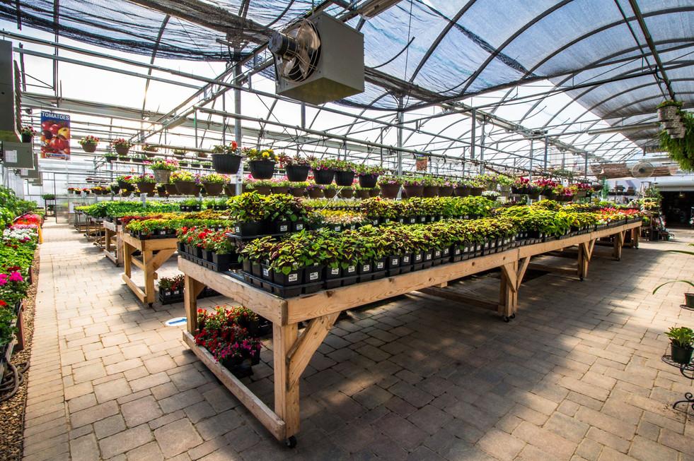 greenhouse 2021 10.jpeg