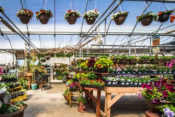 greenhouse 2021 11.jpeg