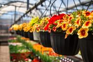 greenhouse 2021 21.jpeg