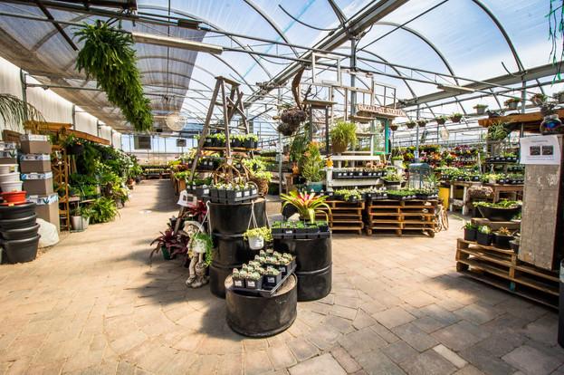 greenhouse 2021 9.jpeg