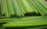 ống-hút-cỏ-bảo-vệ-môi-trường