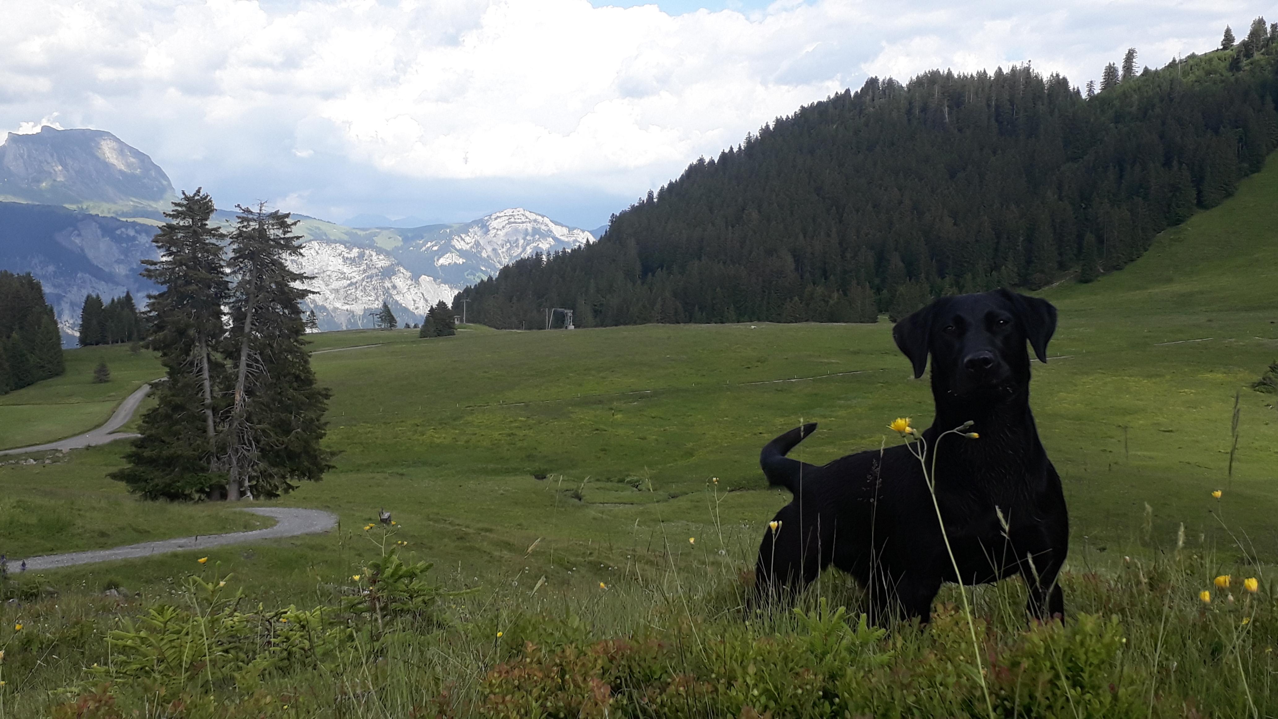 Bea Kurs Schweiz