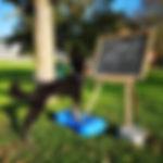 IMG-20181010-WA0004.jpg