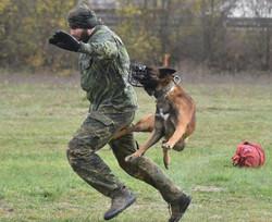 Nyko Ad-Gür; Diensthund