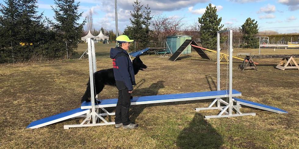 ÖRV A- Trainerschulung Gewandtheit für Rettungshundetrainer