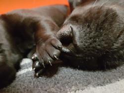 Mutterliebe - Labradorzucht