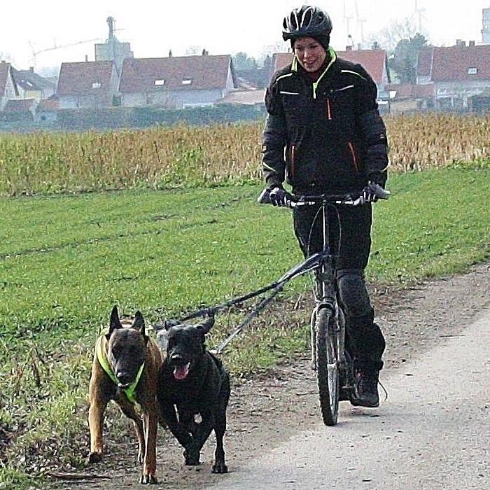 Dogscooter Niederösterreich